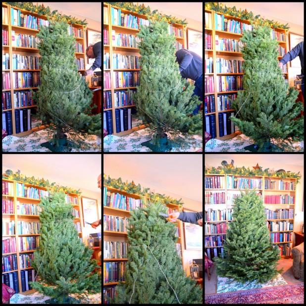 2013-12-10 Mystery Tree 2013