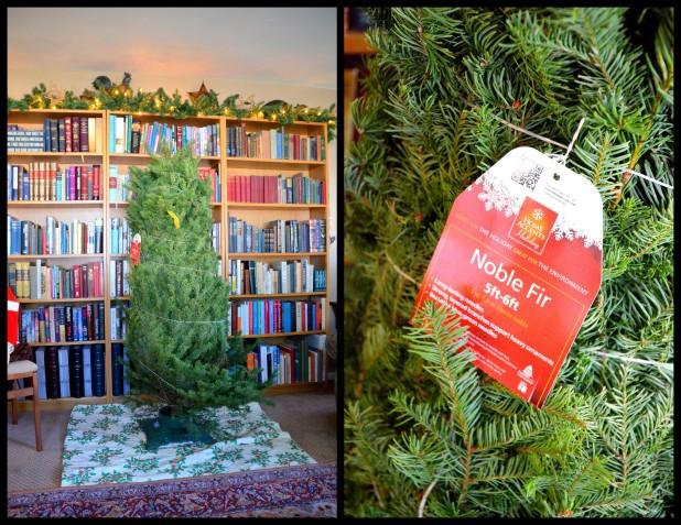 2013-12-10 Mystery Tree 20131