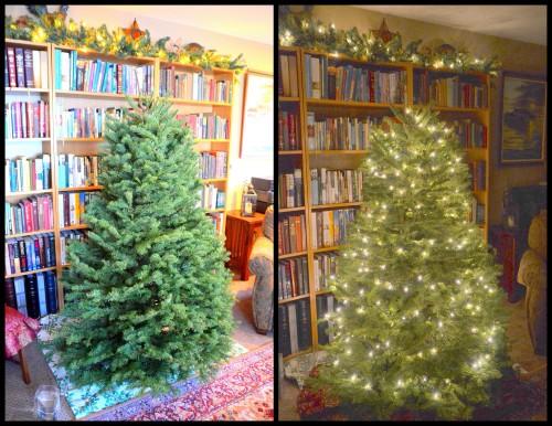 2013-12-10 Mystery Tree 20132