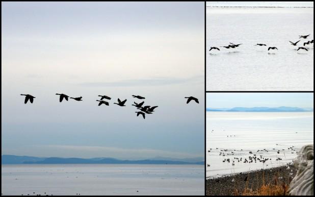 2013-12-20 Vancouver & Snow6