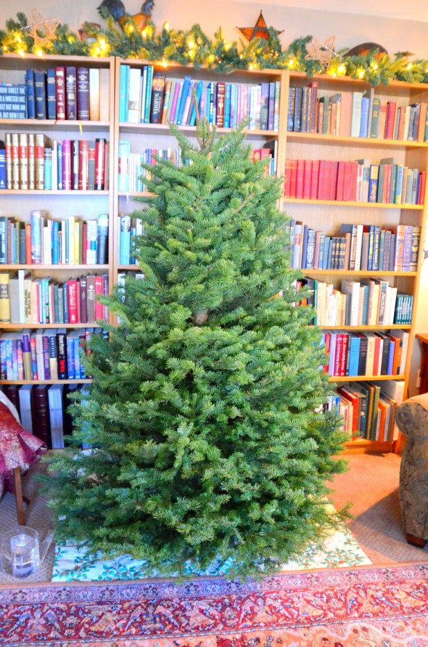 Mystery Tree 2013 010