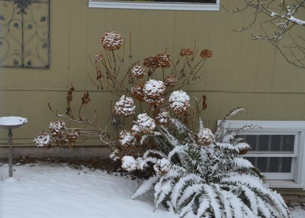Vancouver & Snow 066