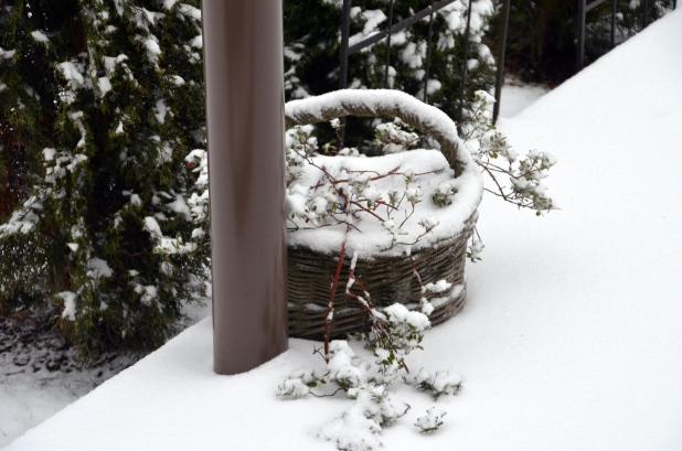 Vancouver & Snow 072