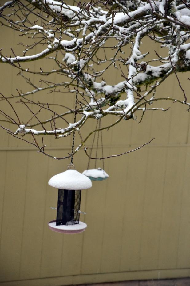 Vancouver & Snow 073