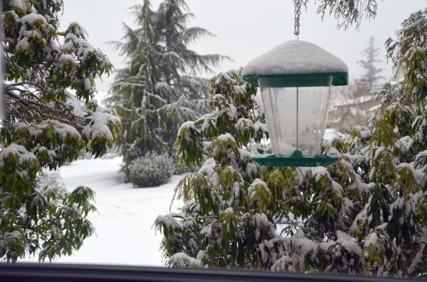 Vancouver & Snow 075