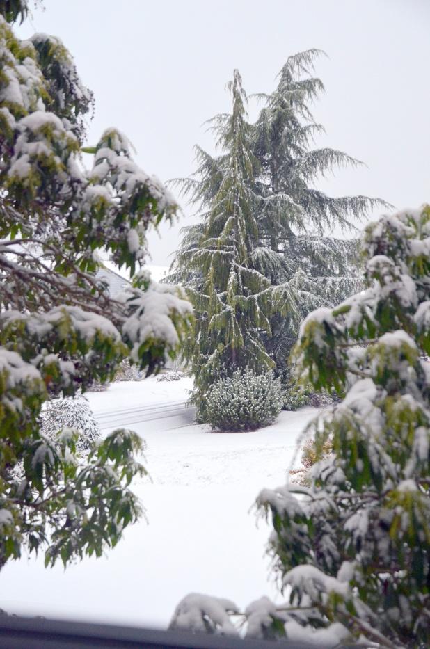 Vancouver & Snow 077