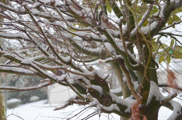 Vancouver & Snow 081
