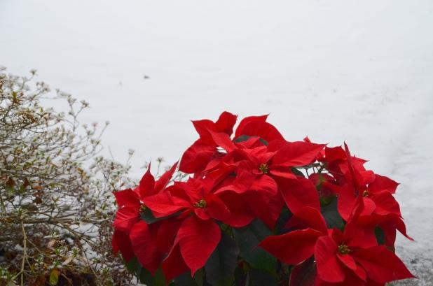 Vancouver & Snow 083