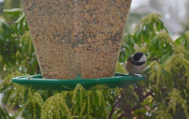 birds 006