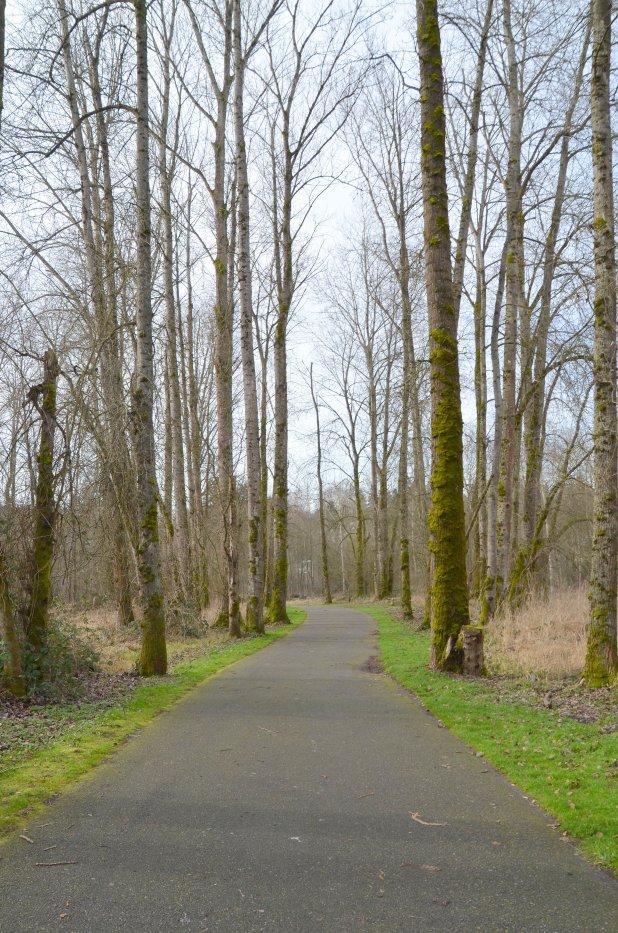 winter trail 002