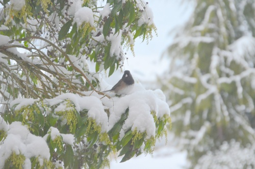 feb snow day 027