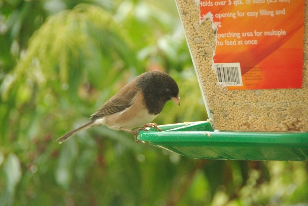 recipe-birds 012