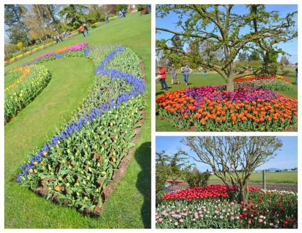 2014-04-07 Tulips11