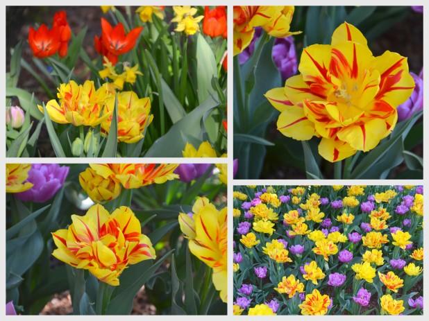 2014-04-07 Tulips3