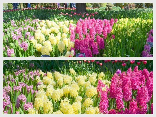 2014-04-07 Tulips4