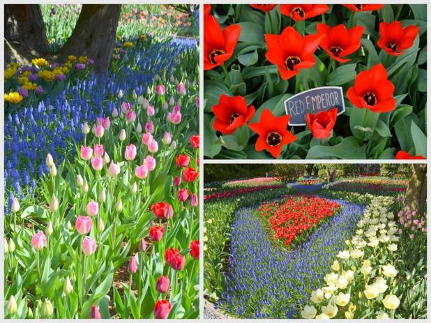 2014-04-07 Tulips6