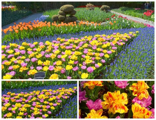 2014-04-07 Tulips7
