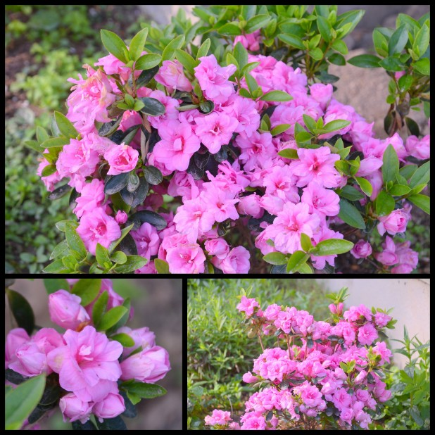 2014-05-22 overgrown yard1