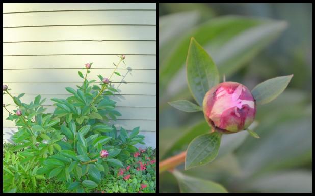 2014-05-22 overgrown yard2
