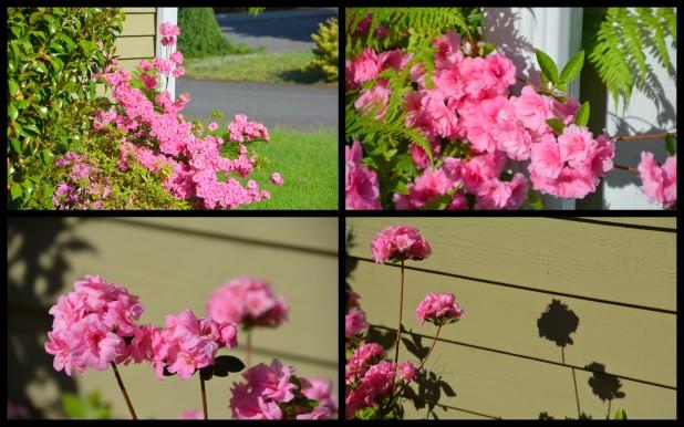 2014-05-22 overgrown yard3
