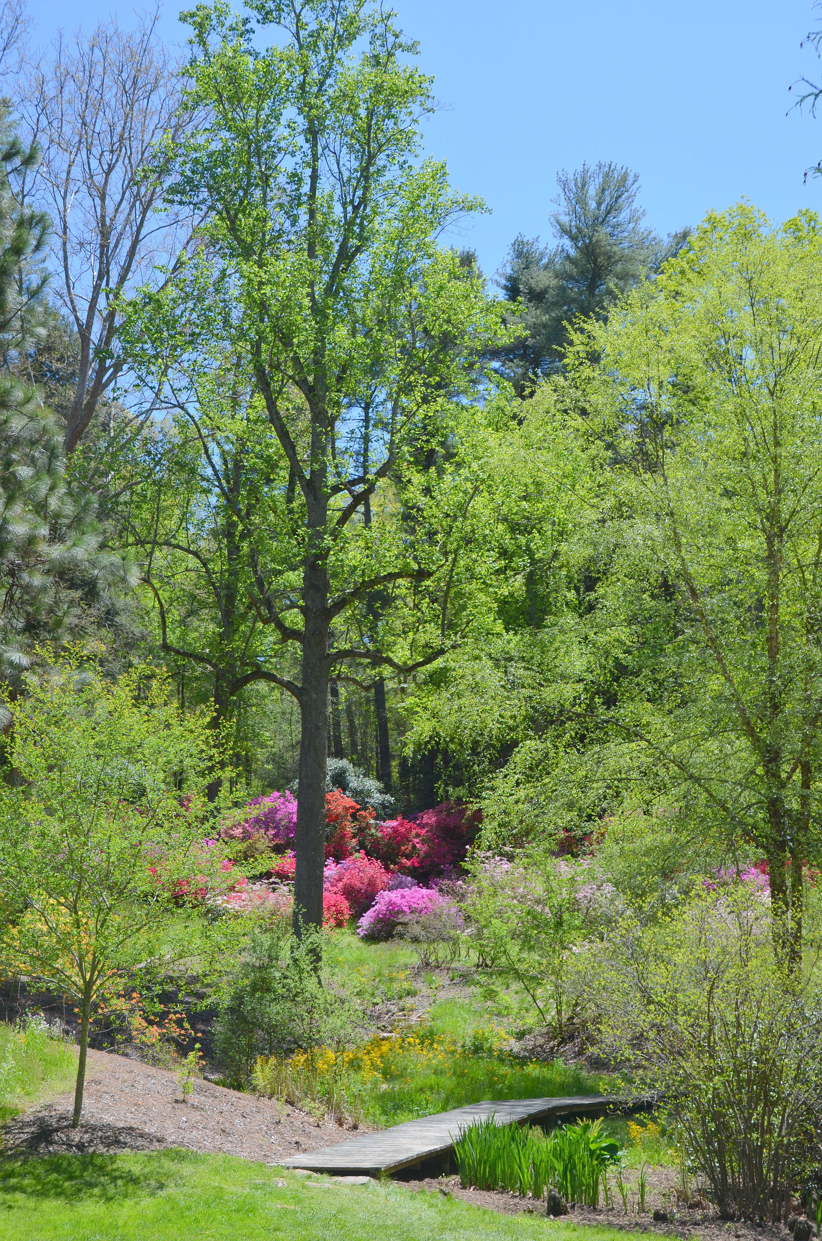 Biltmore House and Gardens – The Happy Wonderer ~ ellen b.