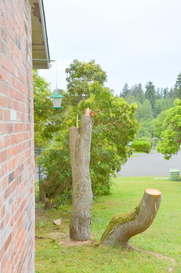 Trees etc 001