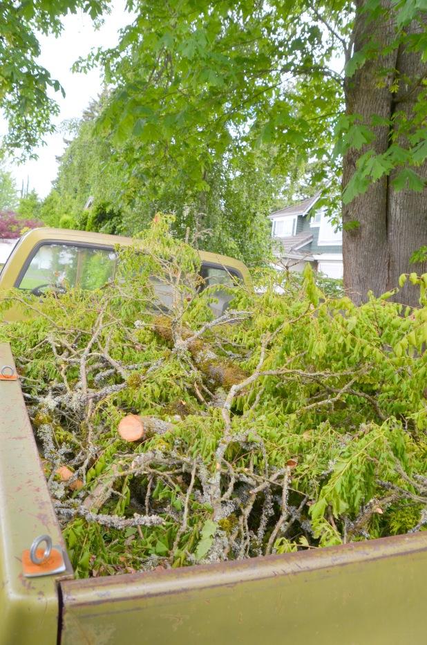 Trees etc 007
