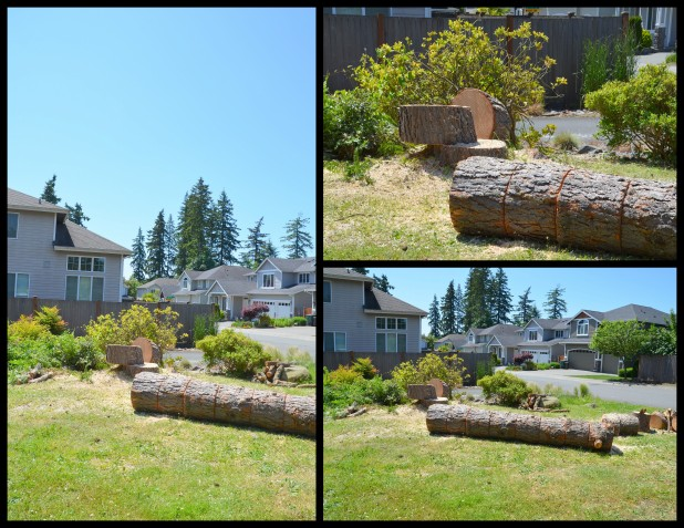2014-06-02 pine tree4