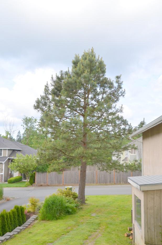 Trees etc 003