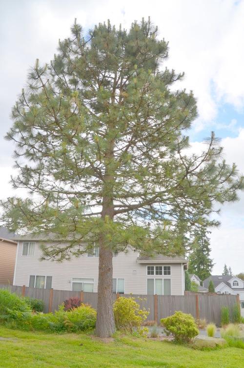Trees etc 005