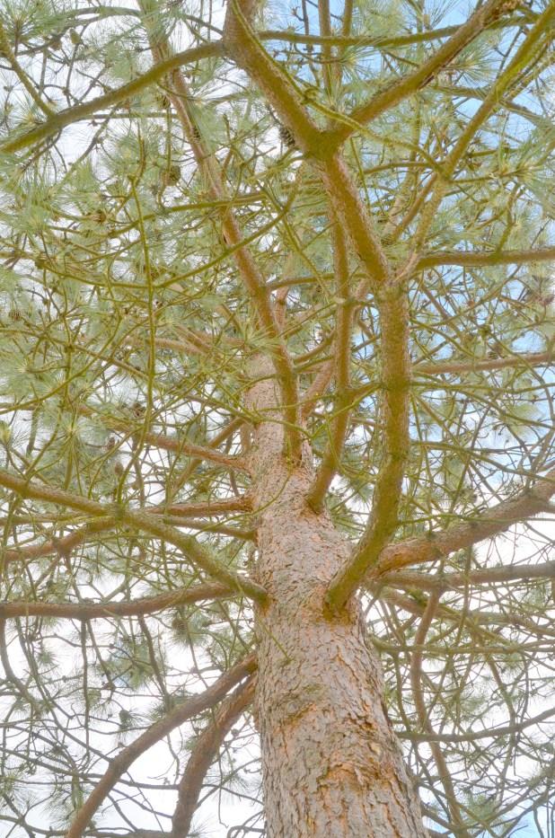 Trees etc 006