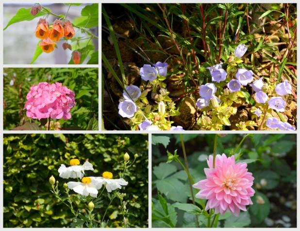 2014-07-07 Day 4 Gardens
