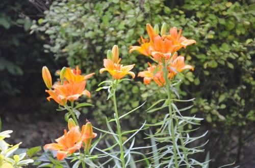 Day 4 Gardens 102