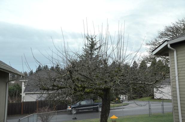 pruning 002