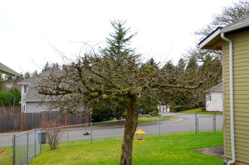pruning 005
