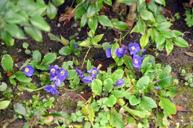 Signs of Spring 021