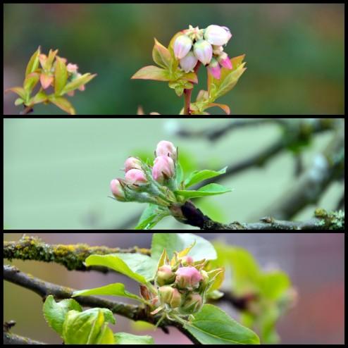 2016-03-29 Spring blossoms3
