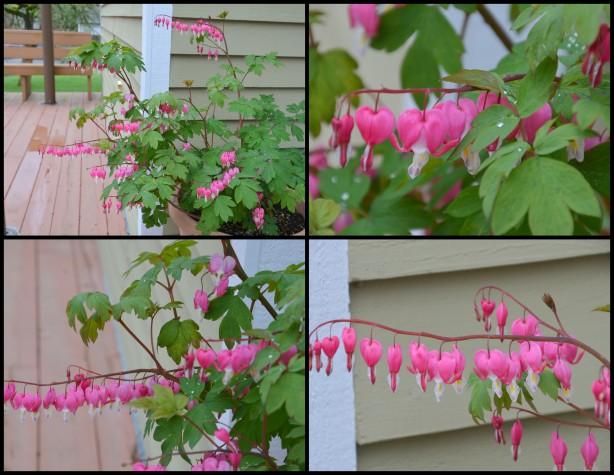2016-03-29 Spring blossoms4