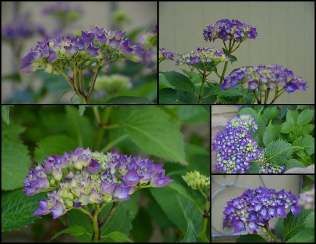 2016-06-18 yard-flowers