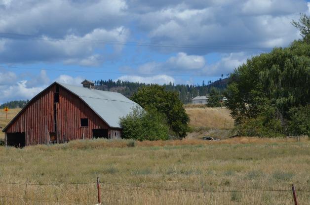 country scenes 045