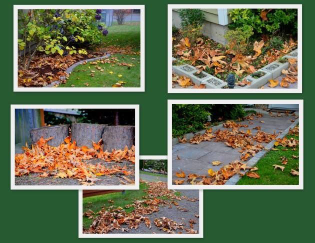 2016-10-24-fallin-leaves