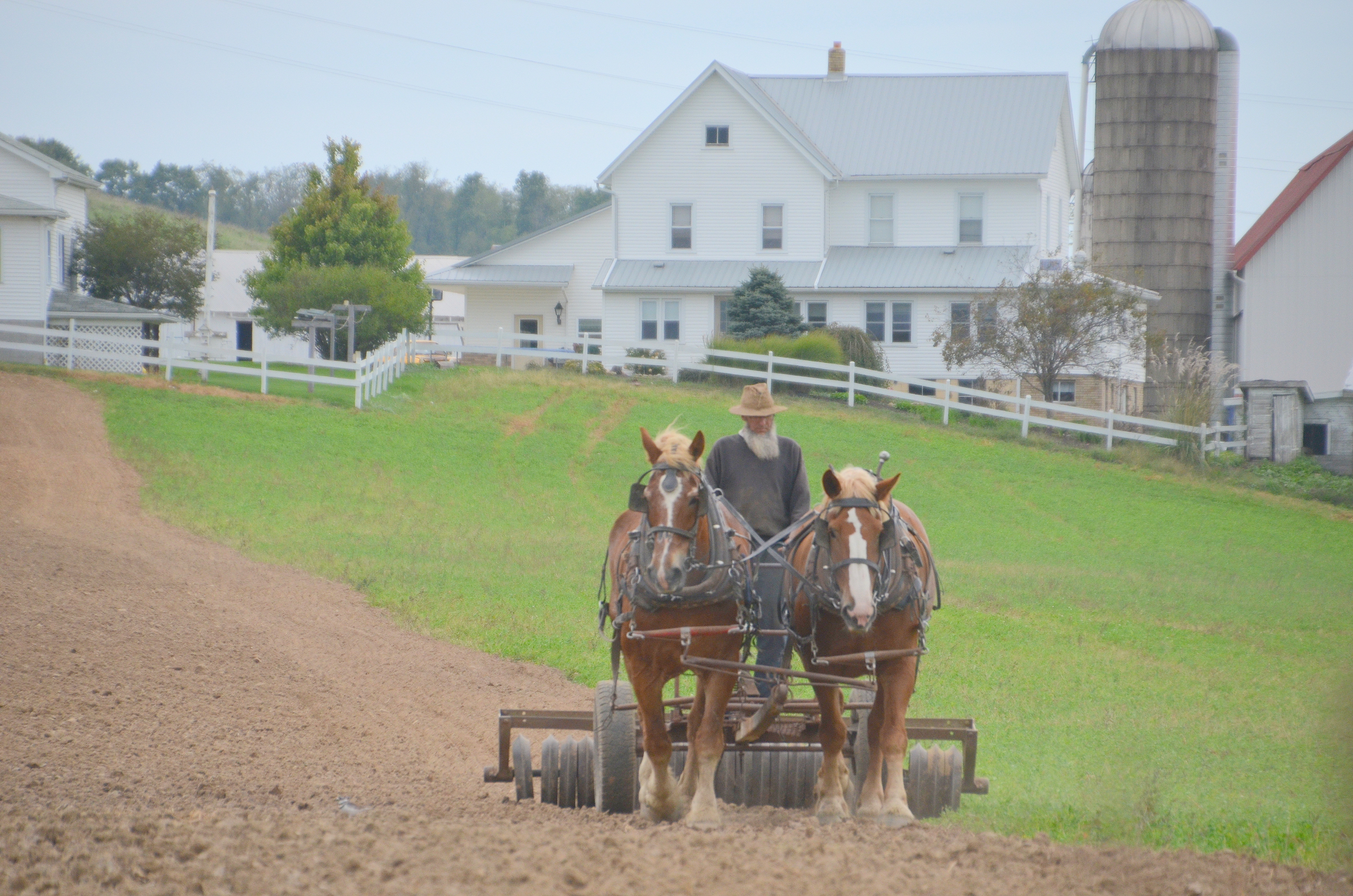 horse city center barns garden nursery amish s wk richard sheds