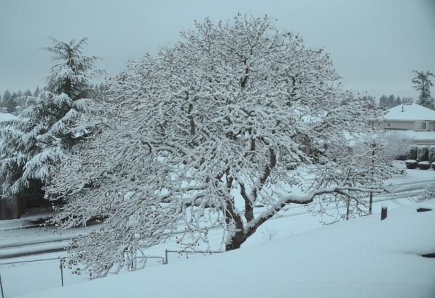 decor-snow-041