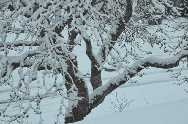 decor-snow-042