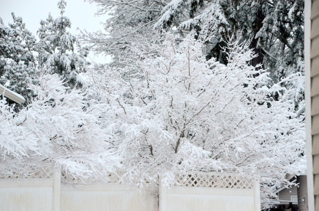 feb-6-snow17-001