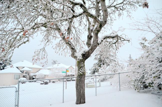 feb-6-snow17-014