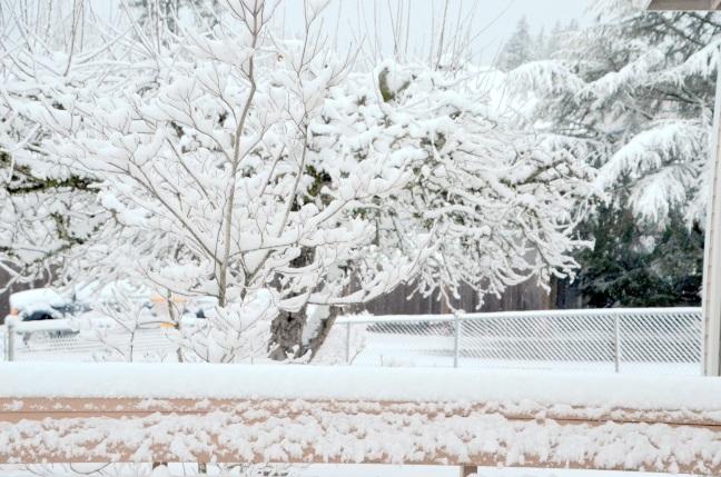 feb-6-snow17-019