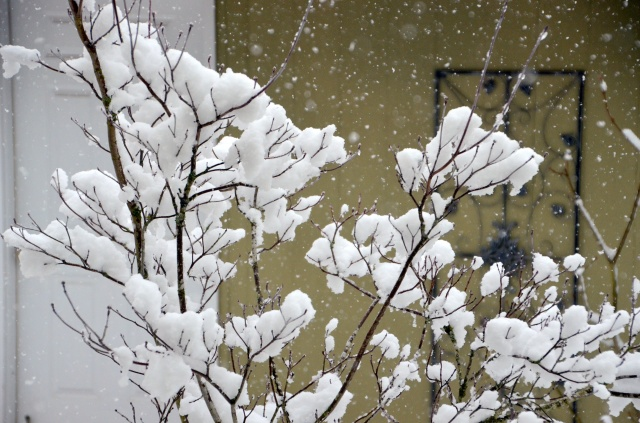 more-snow-006