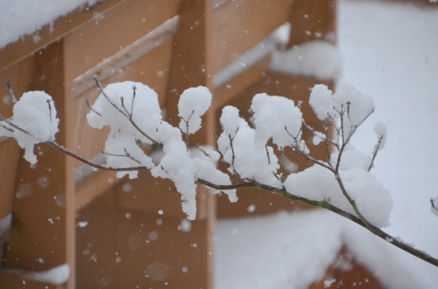 more-snow-011