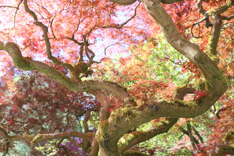 Seattle Japanese Garden | The Happy Wonderer ~ ellen b.